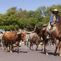 Visiting Fort Worth Texas with kids