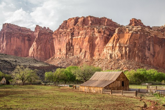 Exploring Capitol Reef National Park with Kids: Your Guide to outdoor adventure