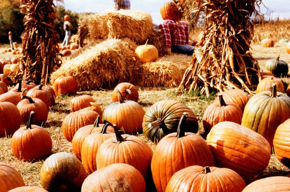 best pumpkin patches across the USA and Canada