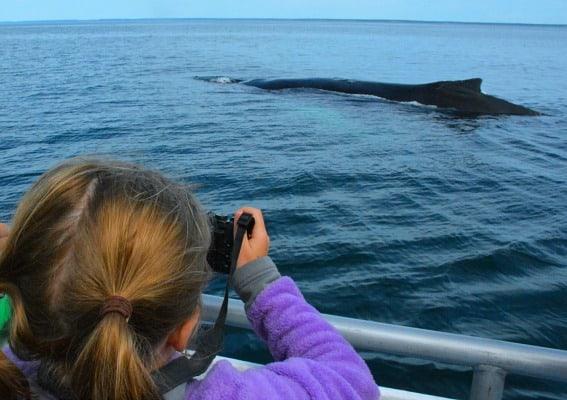 humpback-whale-brier-island