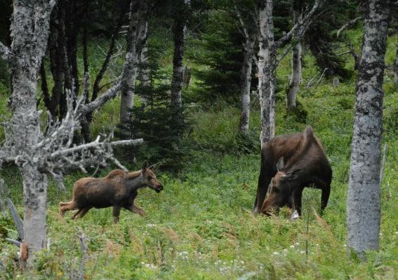 moose-skyline-trail