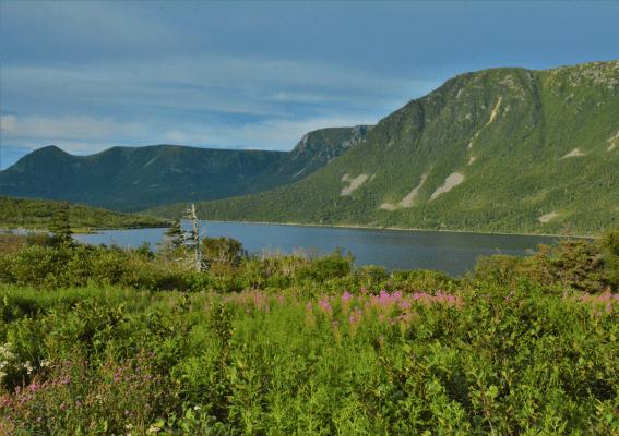 newfoundland-trans-canada-highway