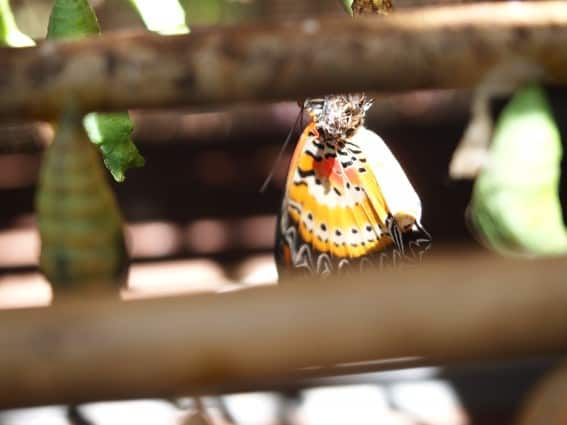 Family-friendly trip to Bantaey Srei Butterfly Garden