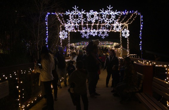 Wild Nights and Holiday Lights at the Folsom City Zoo Sanctuary