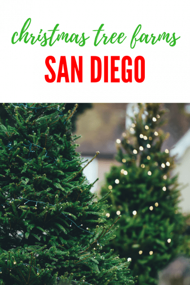 San Diego Christmas Tree Farms