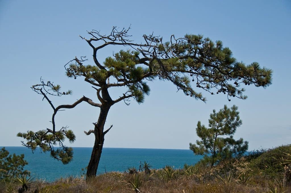 visiting torrey pines are great things to do in San Diego