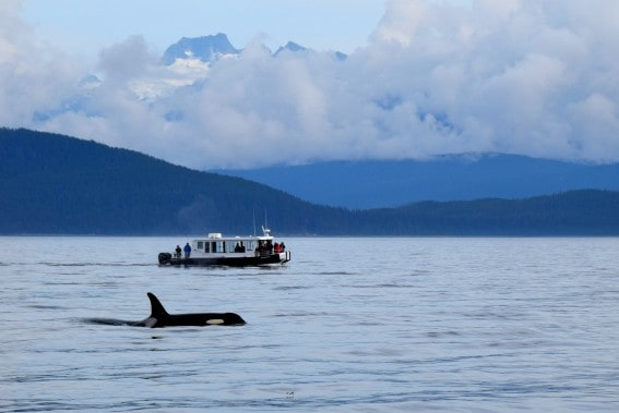 fun family vacations: small cruising with Uncruise Alaska