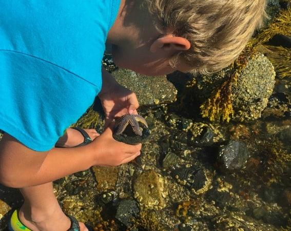 Exploring the tide pools of Acadia National Park