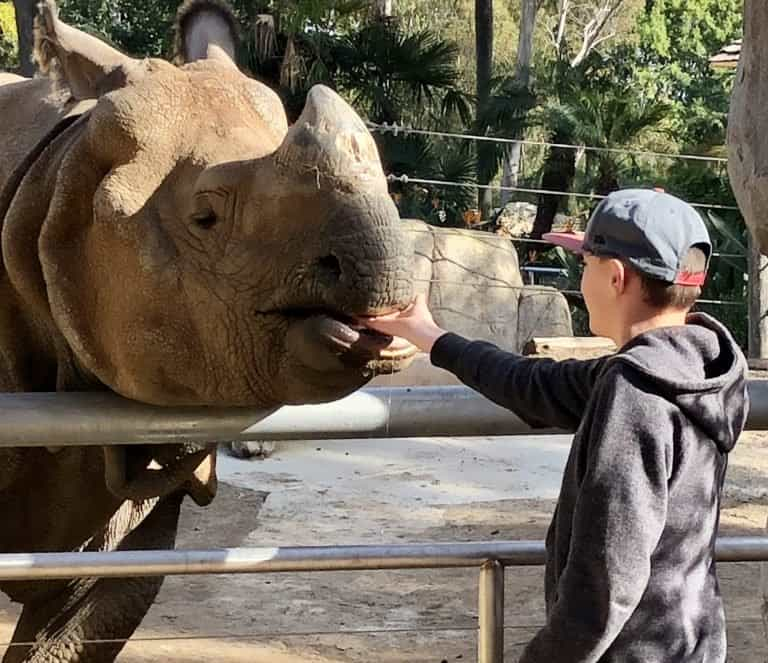 Feeding a rhino at the San Diego Zoo