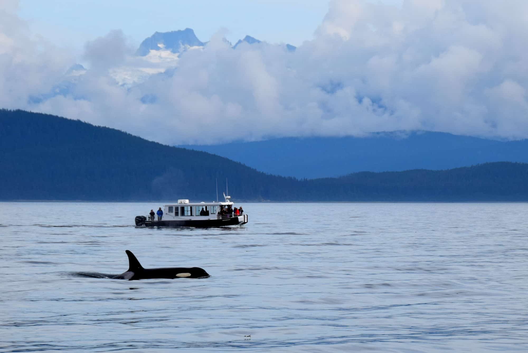 Uncruise Alaska Small Ship Alaska Cruise with kids orca