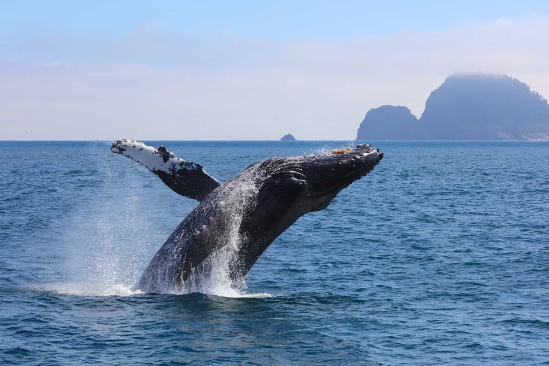 Uncruise Alaska Small Ship Alaska Cruise with kids whale