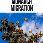 Road School- Butterfly Migration