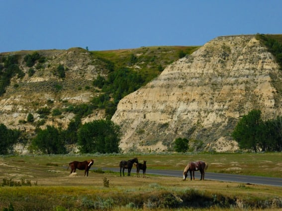 Some wild horses in Theodore Roosevelt National Park will have cockles in their manes or gorgeous patterns and coloring. Against the rugged and craggy backdrop of the North Dakota badlands, it's easy to imagine you're Annie Oakley or Teddy Roosevelt himself.