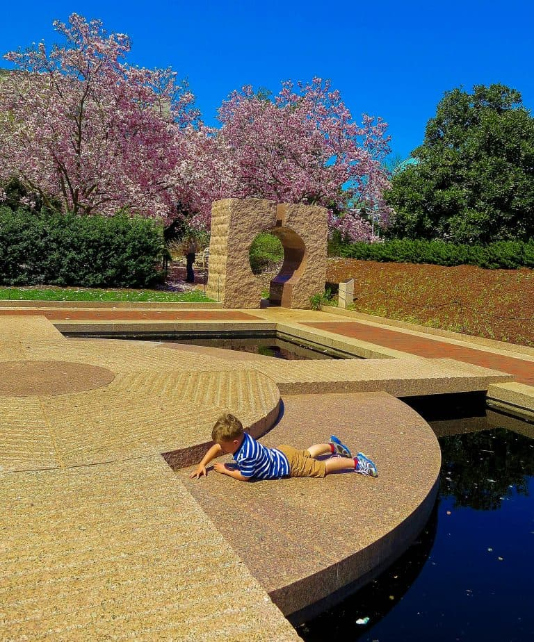 what to do in Washington DC with Kids enjoy the spring bloom