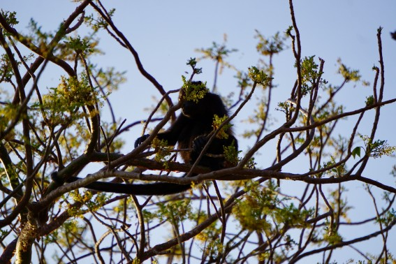 Nicaragua with Kids with the howler monkeys
