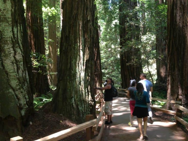 Cathedral Grove in Muir Woods
