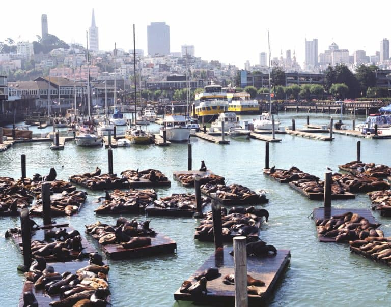 You can't head to San Francisco with kids without a visit to Fisherman's Wharf