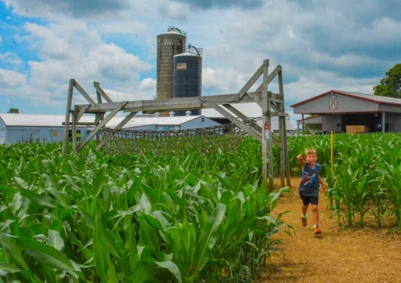 Visit Lancaster, Pennsylvania's Dutch Country, for Family Fun on the Farm 1
