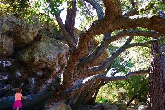 Berkeley Sightseeing: A Weekend of Family Fun in Berkeley California 2