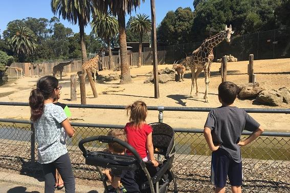 Exploring the Oakland Zoo with kids