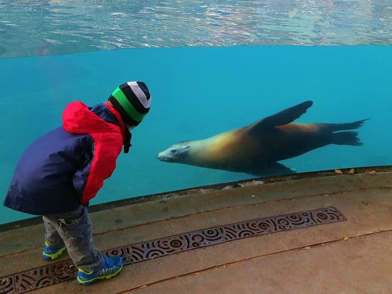 What to do with toddlers in DC? The National Zoo