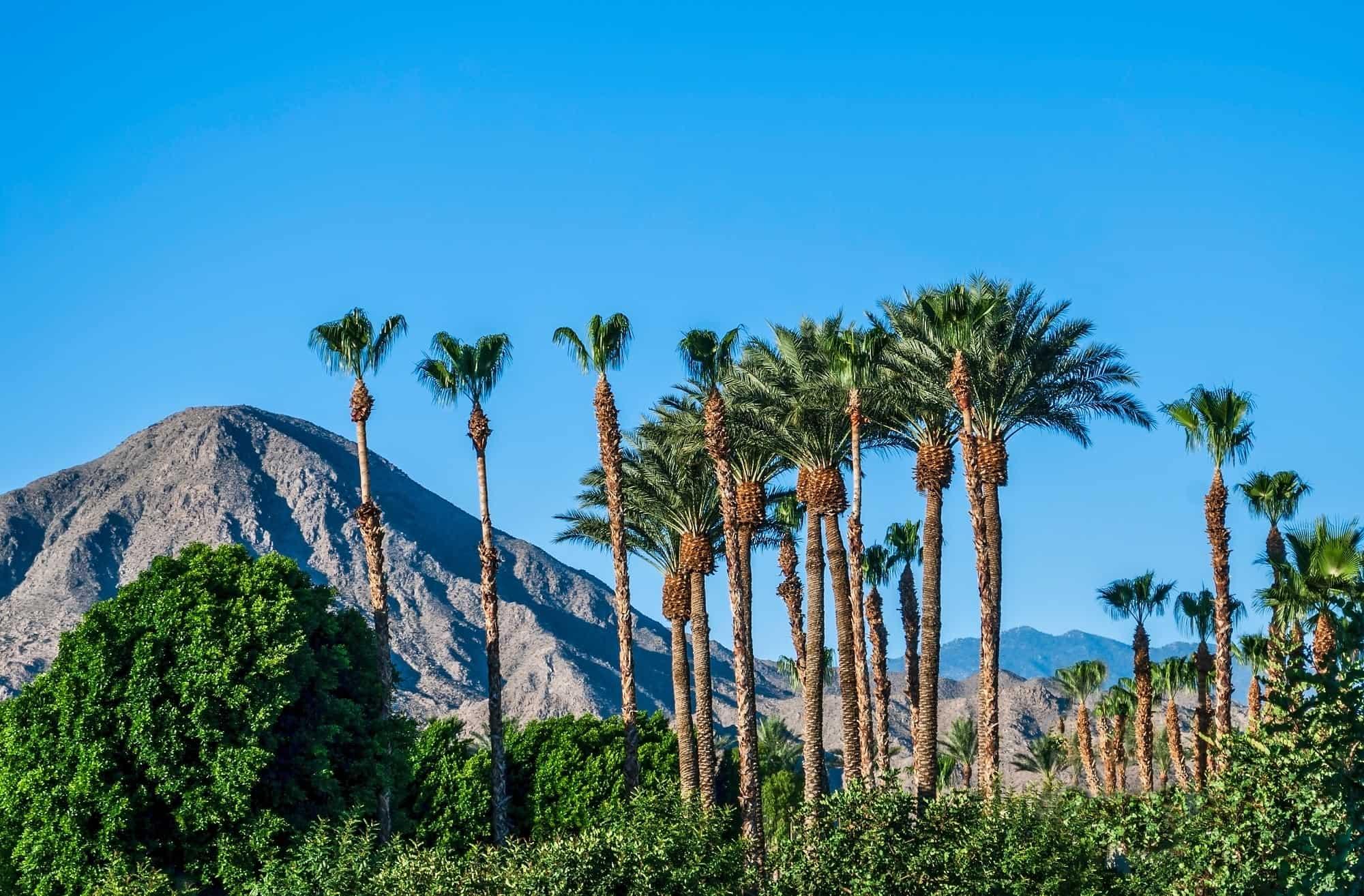 Car Rentals In Palm Springs Ca