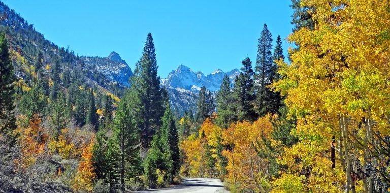 California Fall Foliage Bishop Creek Canyon