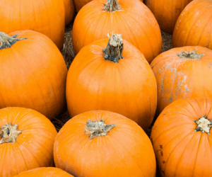 Copy of fall crafts