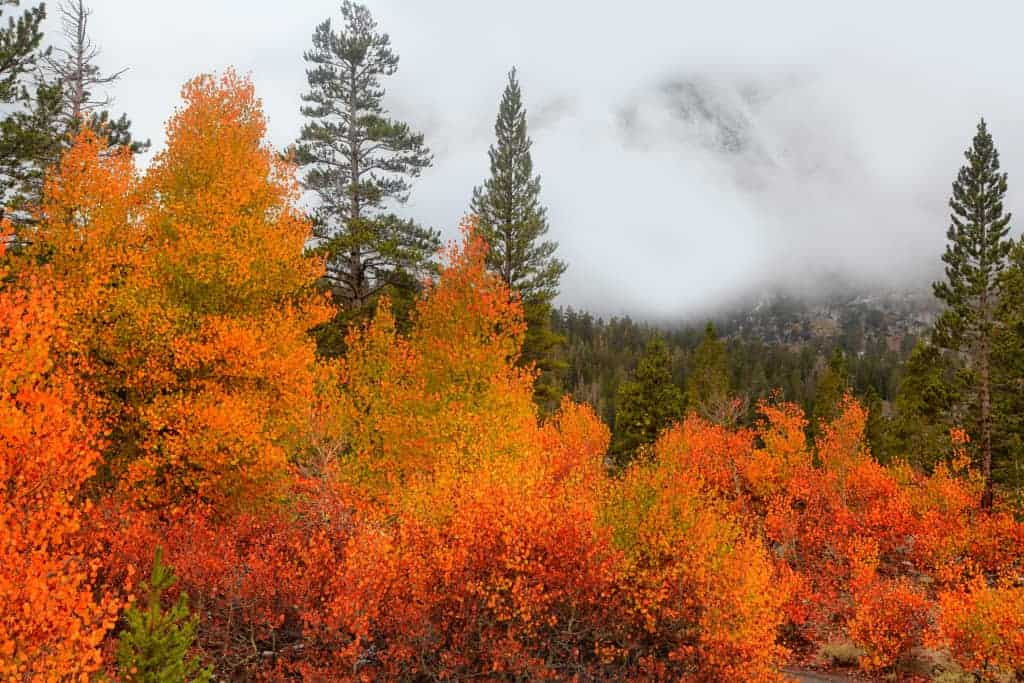 Fall in California | The 8 Best Places to See California Fall Color