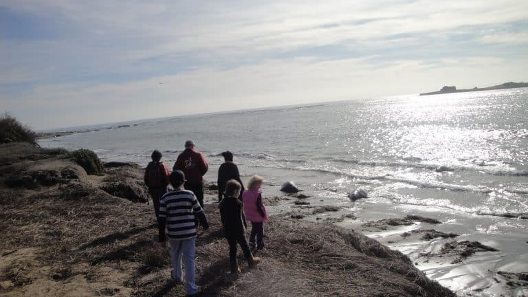 Things to do in Santa Cruz with kids - Elephant Seals