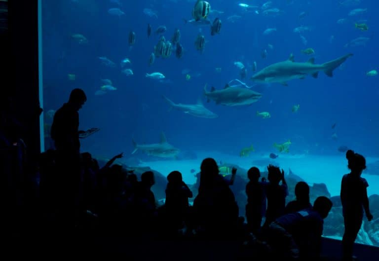 The Georgia Aquarium is one of the best things to do in Atlanta with kids