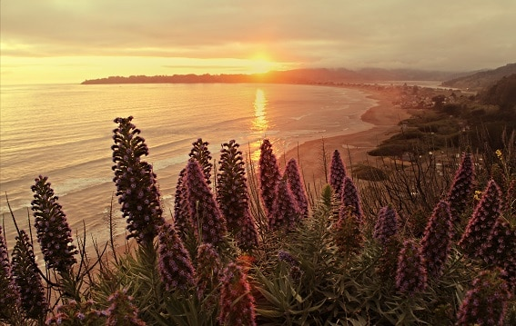 Day Trips from San Francisco Stinson Beach