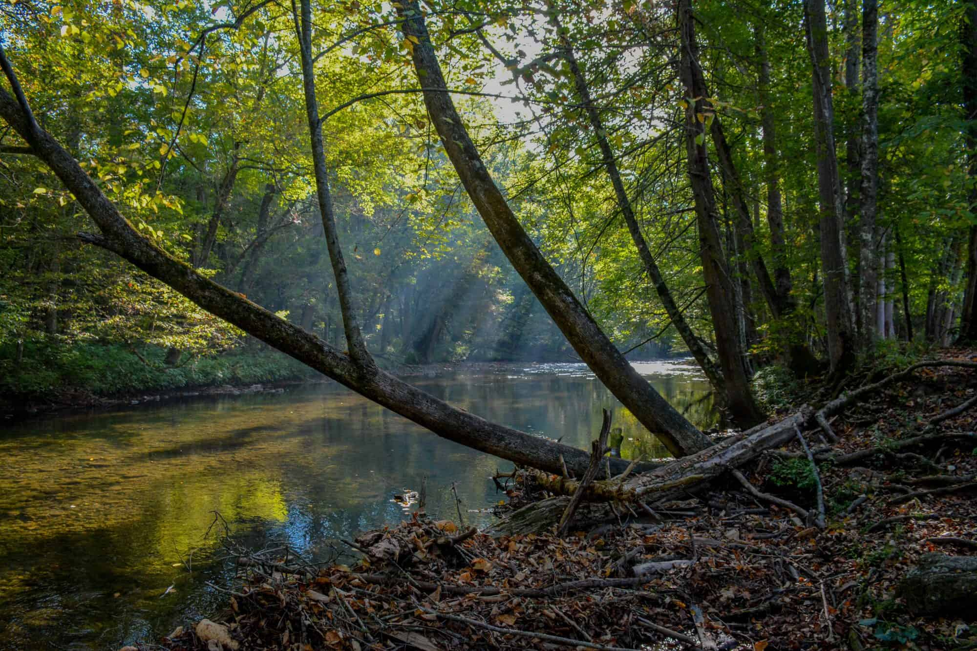 10 Best Things to do in Great Smoky Mountains National Park