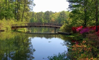 things-to-do-in-georgia-for-families-by-flickr-crescibene