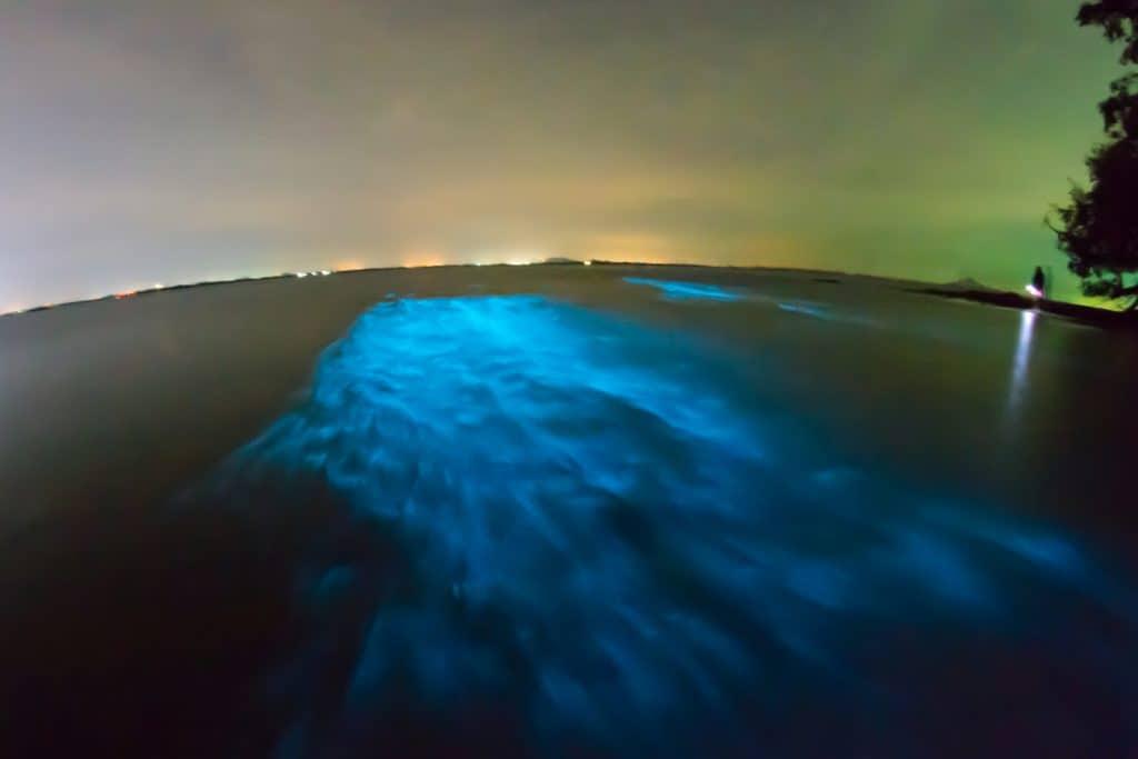 Bioluminescent Bay