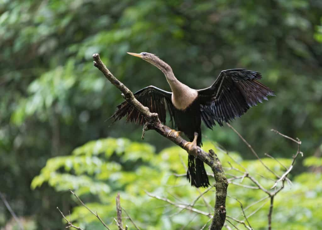 Things to do in Costa Rica - Birdwatching in Toruguero National Park