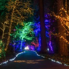 Best Christmas Lights in Portland, Oregon | 5 Not-to-Miss Holiday Light Shows