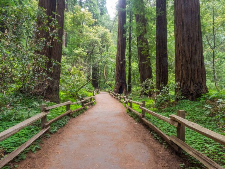 One of the best day trips from San Francisco is a visit to Muir Woods