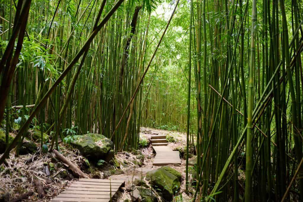 Pipiwai Trail Hawaii