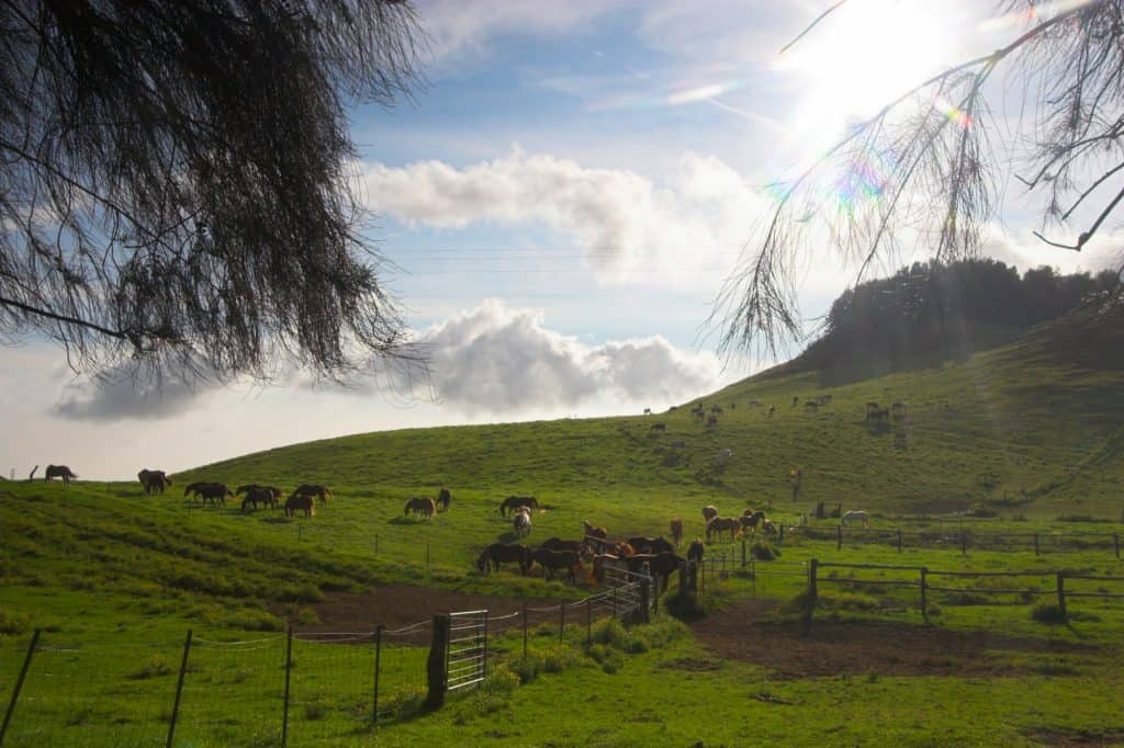 things to do on the big island with kids horses