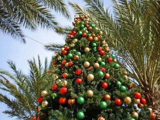 Christmas-San-Diego-Family-Kids-Tree-Palms-Shutterstock