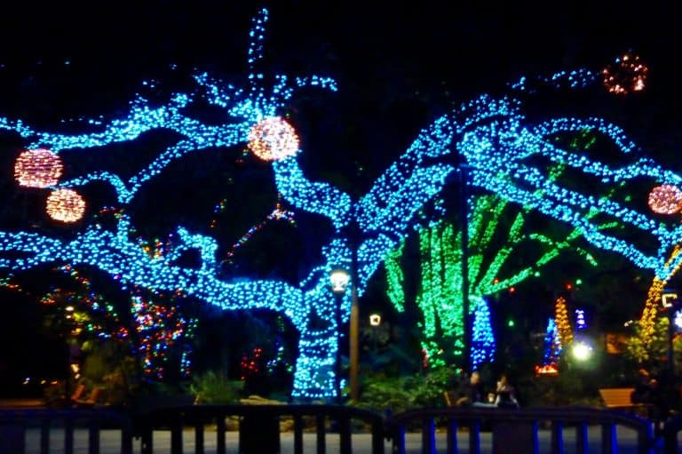 Christmas events in Houston zoollights
