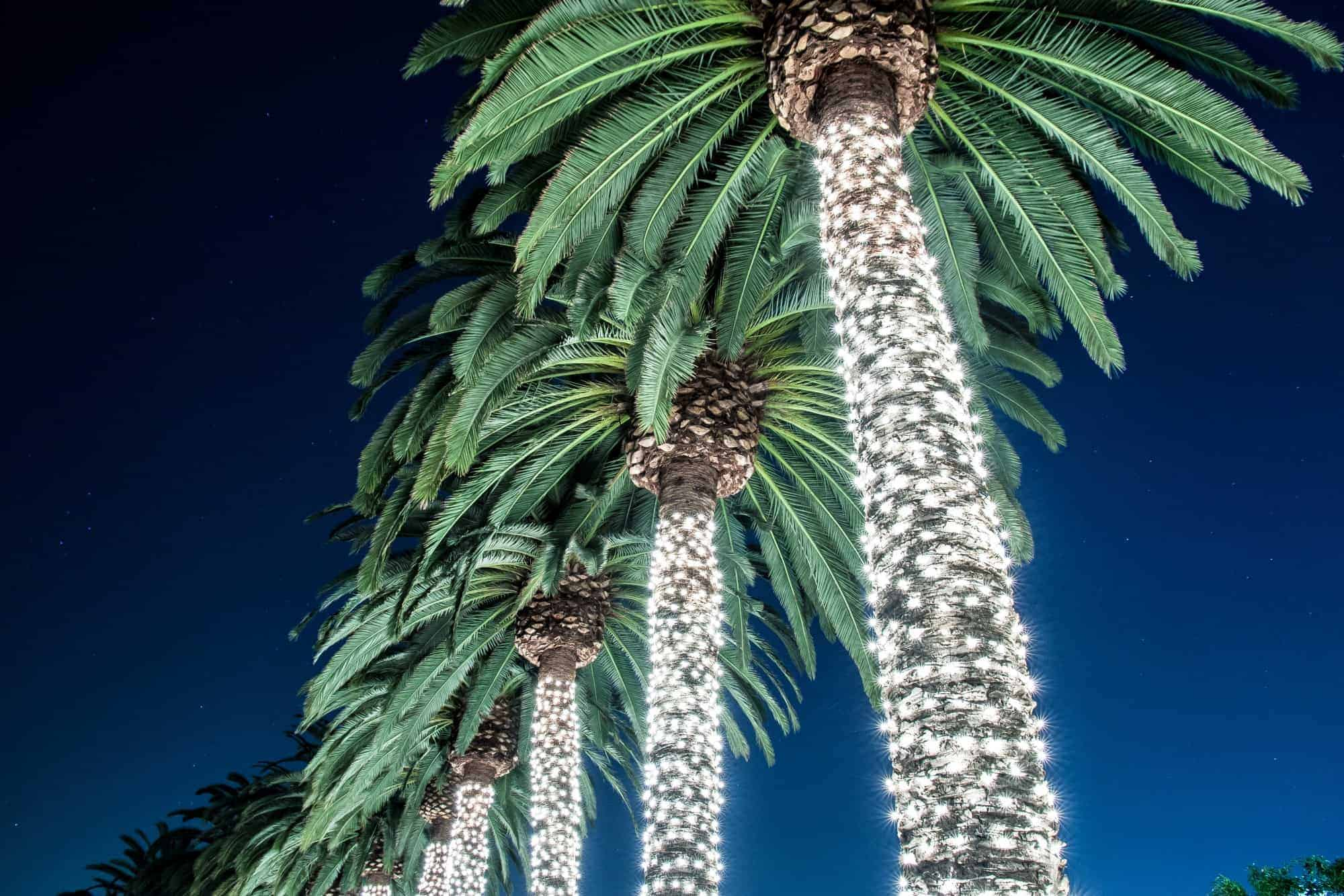 Palm-Springs-Christmas-Holiday-Family-Lights-Shutterstock