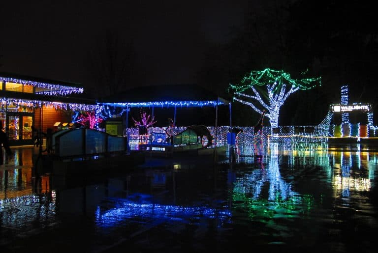 christmas-events-in-seattle-wild-lights-zoo