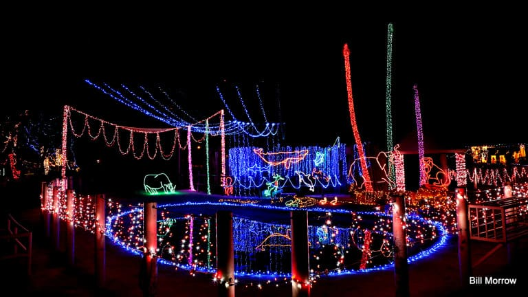 christmas events in tucson zoo lights