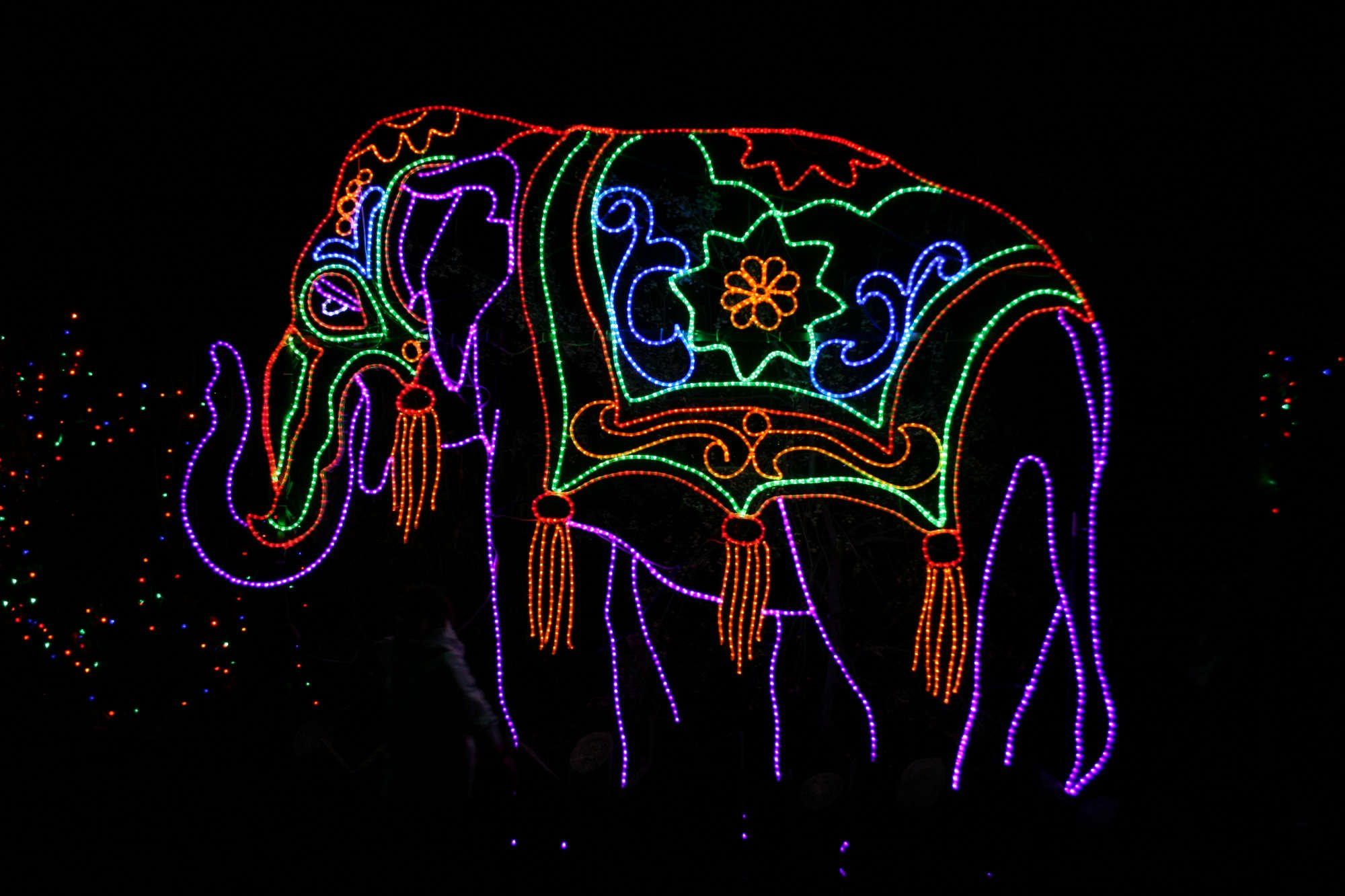 christmas things to do in denver zoo lights by flickr kari