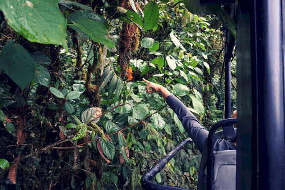 Mashpi Lodge: luxury meets adventure in Ecuador's cloud forest 11
