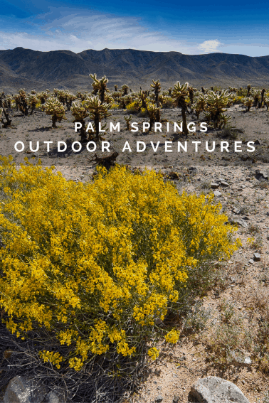 Four Outdoorsy things to do in Palm Springs with your family