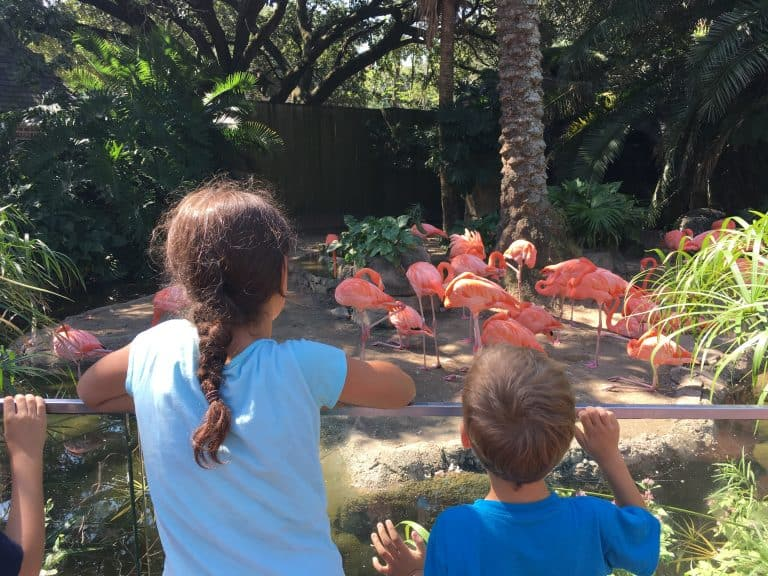 audubon zoo new orleans with kids