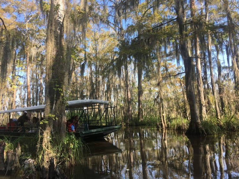 cajun encounters swamp tour